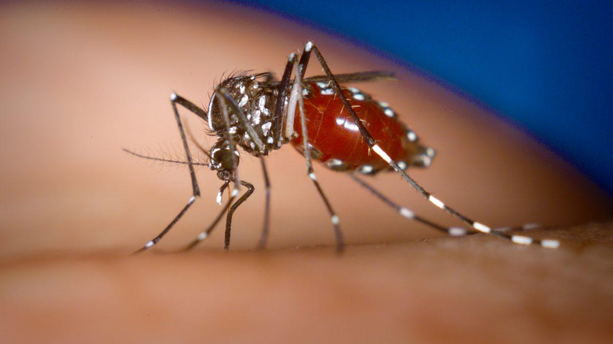 Chikungunya: saiba o que é essa doença e quais são seus sintomas!