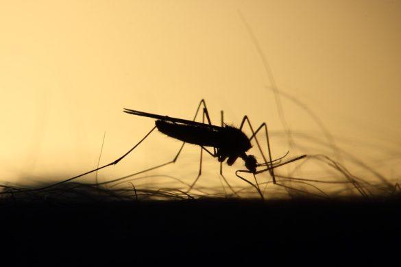 Penumbra do mosquito Aedes aegypti picando uma pessoa