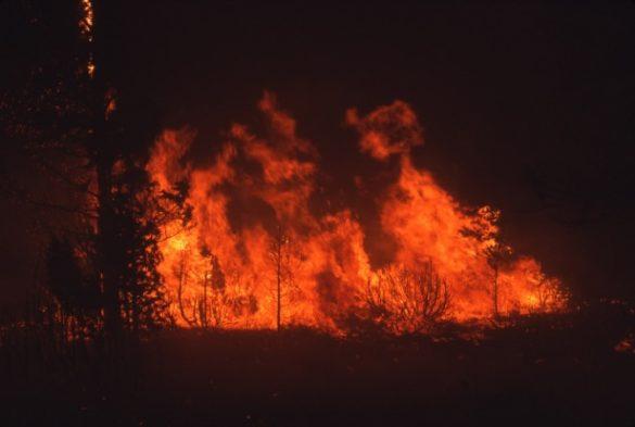 Floresta pegando fogo, demonstrando os incêndios na Amazônia