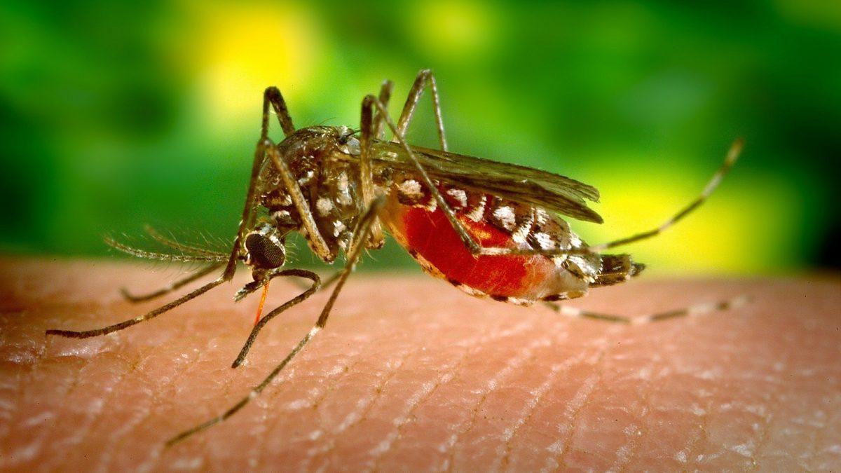 Saiba os sintomas da dengue hemorrágica!