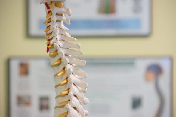 Estrutura anatômica da coluna cervical humana