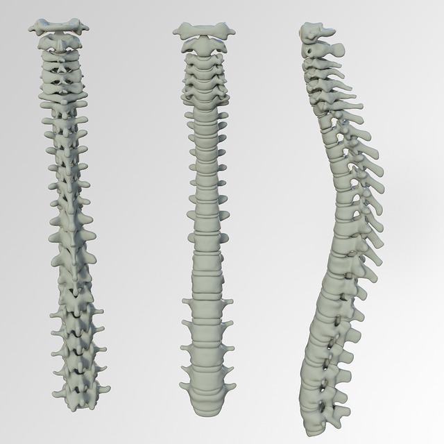 Coluna vertebral: anatomia e principais complicações!
